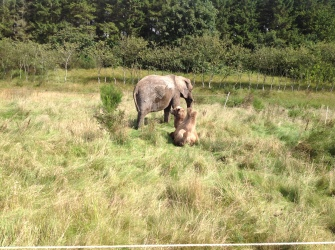 cirkus trapez - elefant